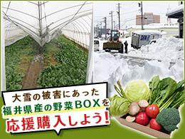 大雪の被害にあった福井県産の野菜BOXを応援購入しよう!