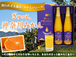 知られざる逸品!みかんジュース「ぎゅっと、神奈川みかん」 ~その製法やこだわりを知ったとき、あなたはきっと飲みたくなる~